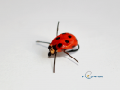 ladybug for fly fishing